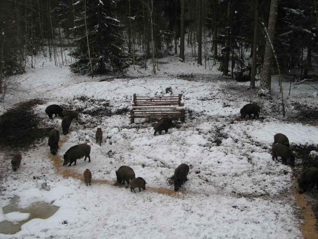 Бенидорм кабана зимой